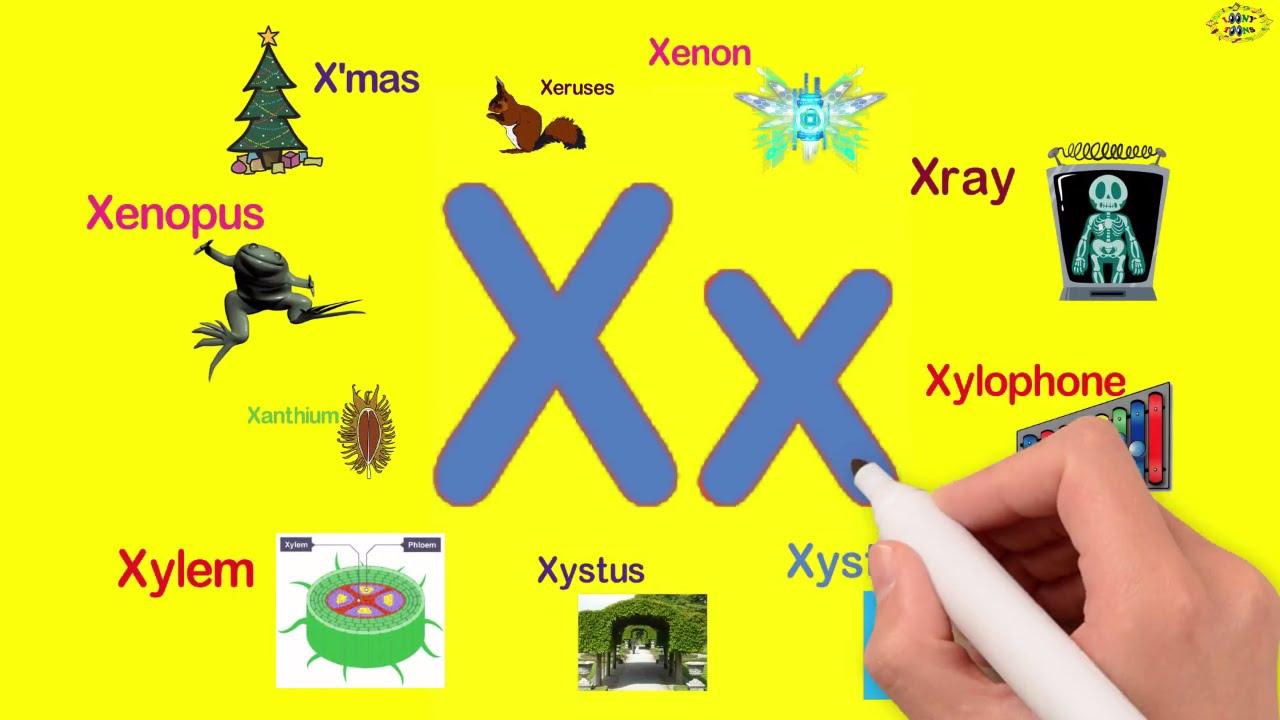Từ vựng tiếng Anh bắt đầu bằng chữ X